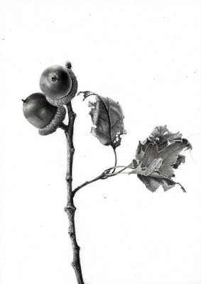 acorns