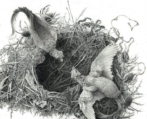 building a nest
