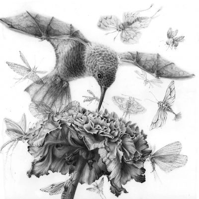 flower feeding