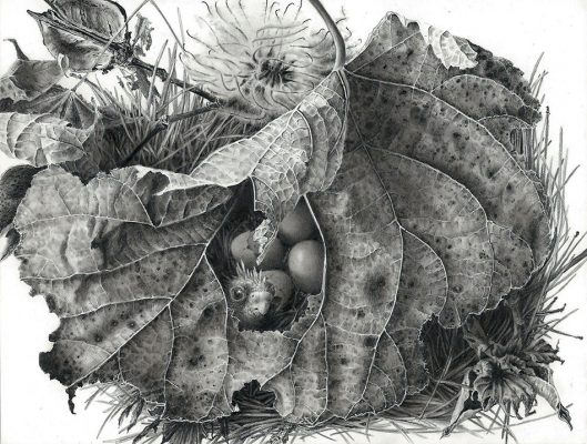 hatchlings