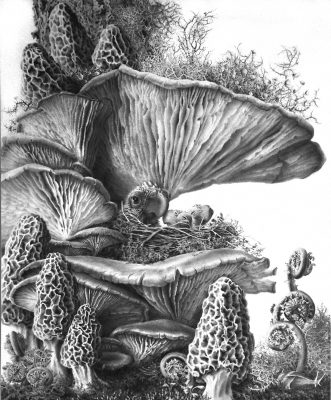 """mushrooms commission inspired by """"tree fungi""""  graphite on clayboard 11"""" x 14"""""""