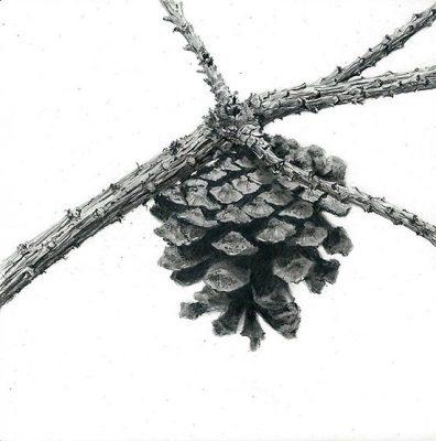 """single pinecone  graphite on clayboard 4"""" x 4"""""""