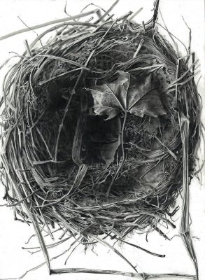 """robins nest with leaf  graphite on clayboard 8"""" x 10"""""""