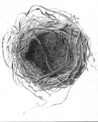 "robins nest  graphite on clayboard 8"" x 10"""